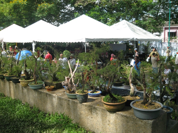 3rd Malaysia Bonsai Carnival-Baeckea Frutescens almost steal the show Img_4034