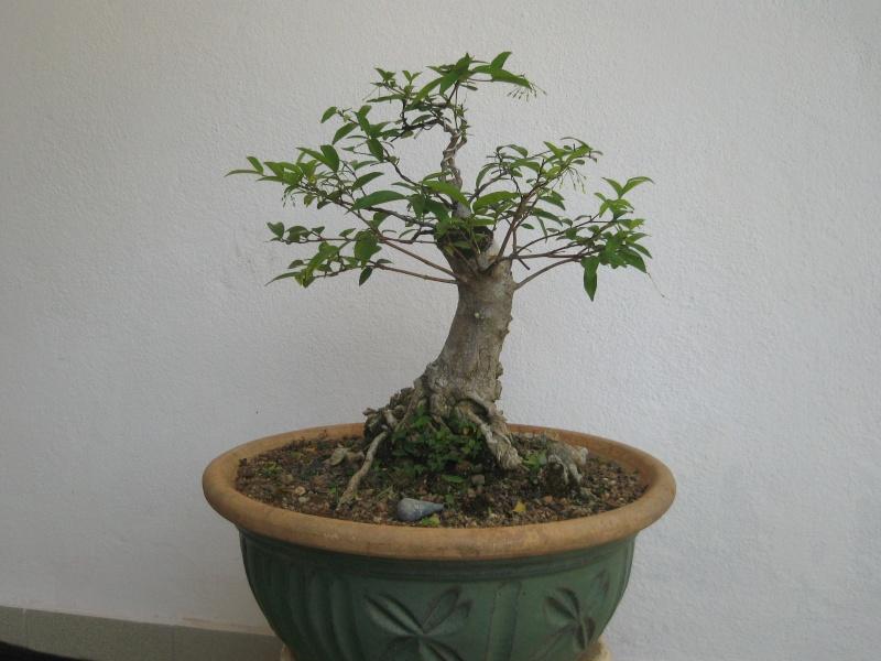 Protuding Roots Img_4113