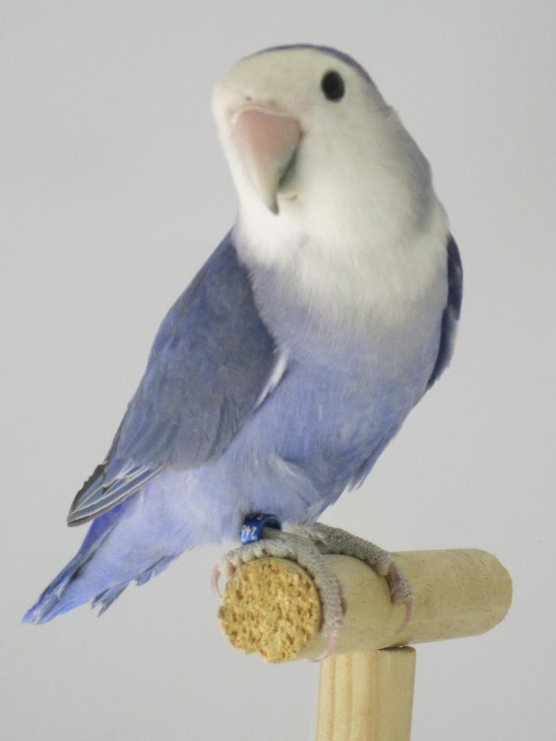 *Bleu* violet Img_1513