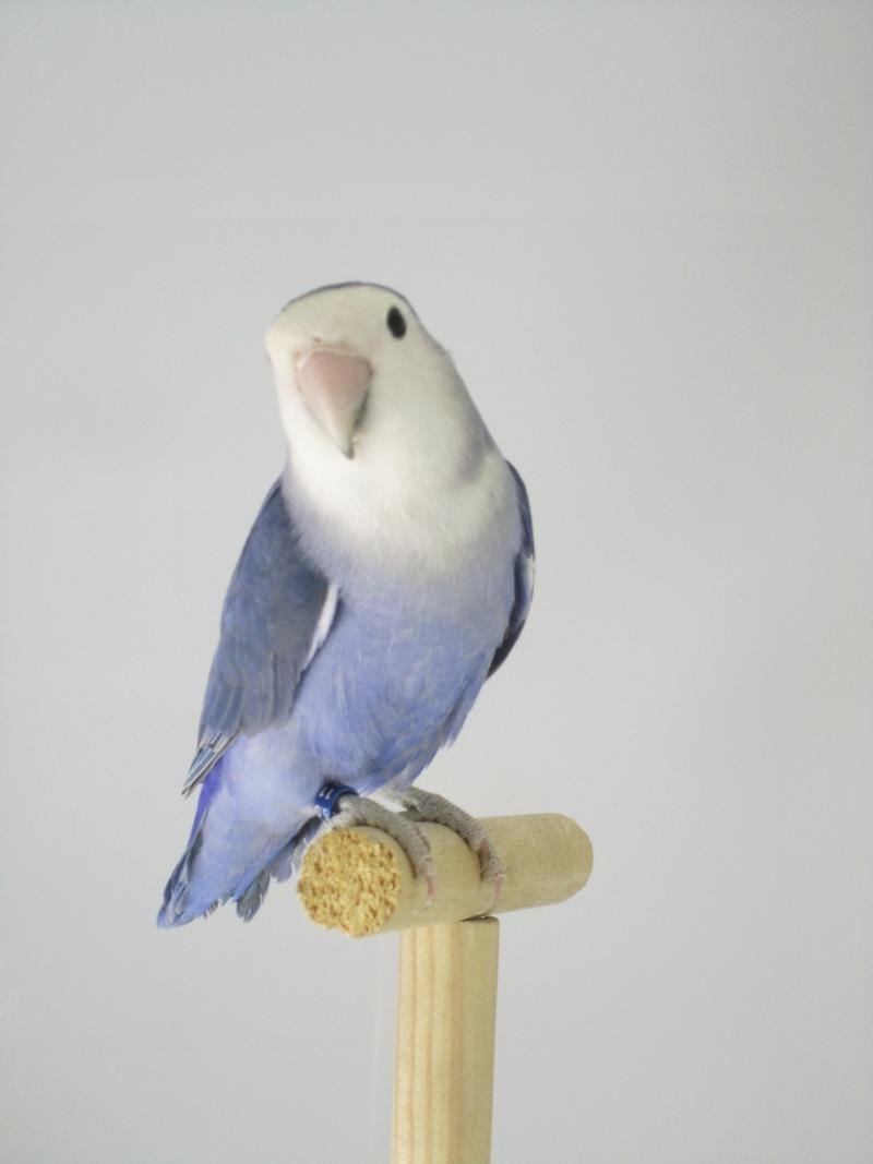 *Bleu* violet Img_1514