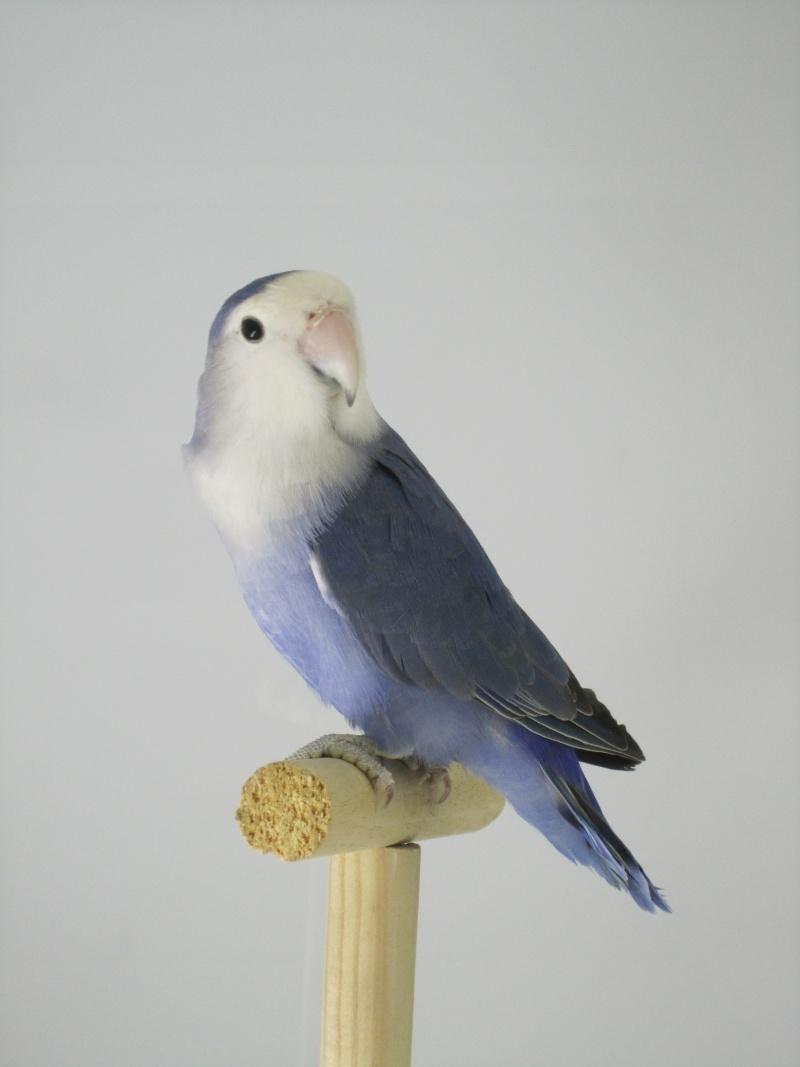 *Bleu* violet Img_1515