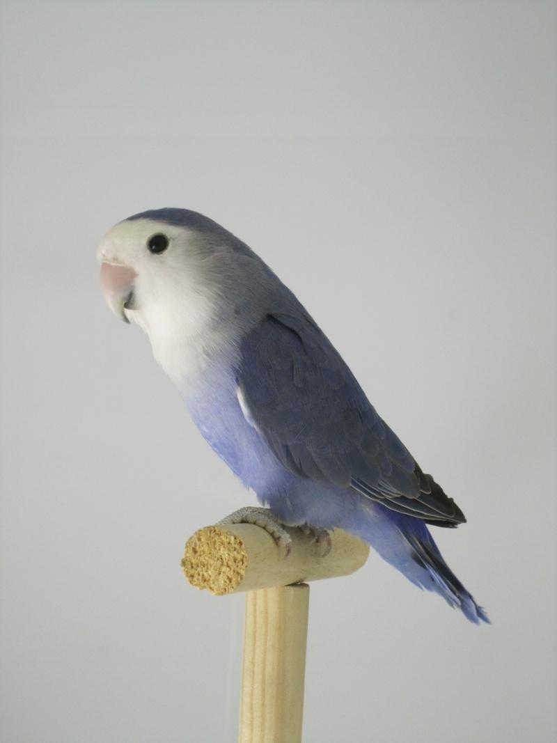 *Bleu* violet Img_1516