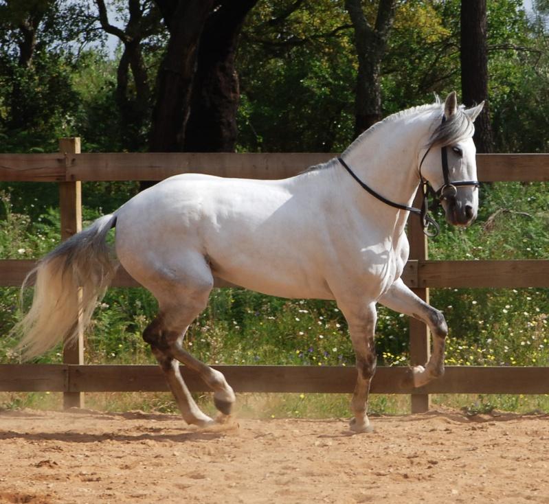 lista de animais comuns Cavalo10