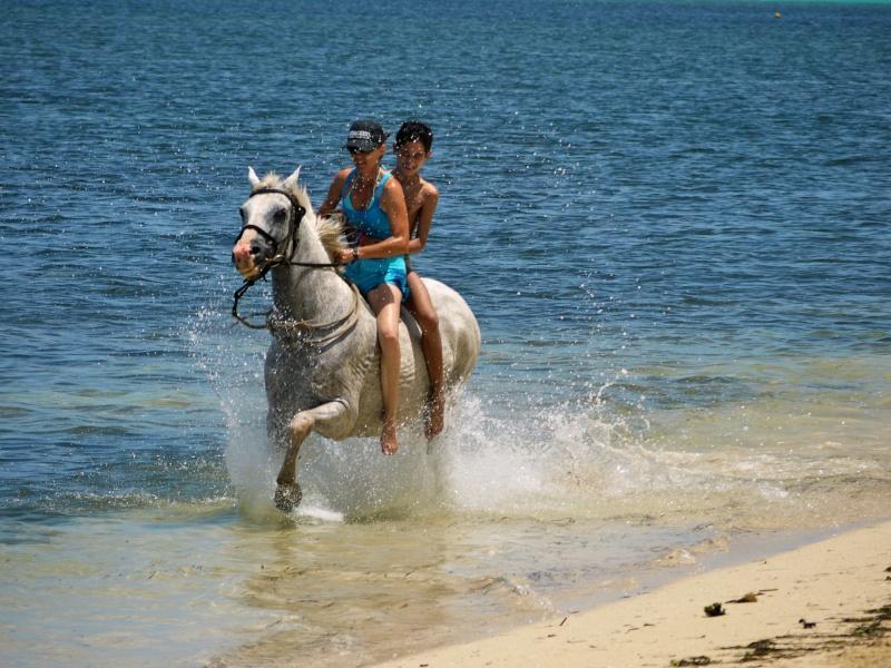 Les chevaux et l'eau, venez votez... P1000612