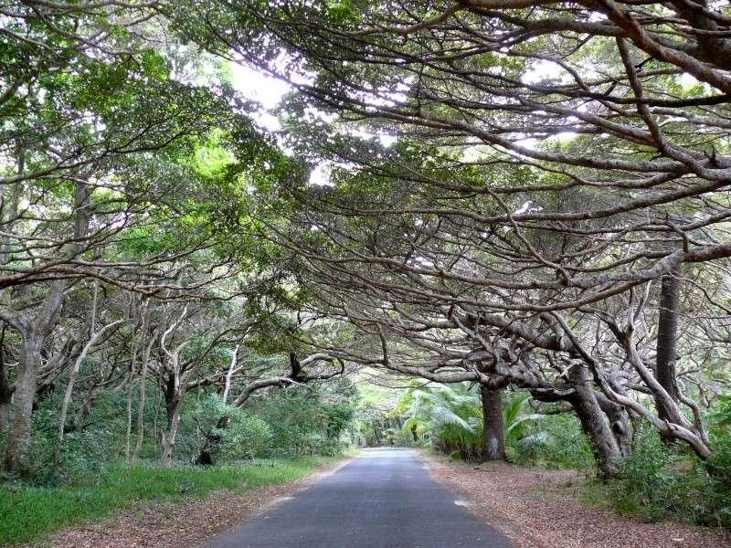 La Nouvelle Calédonie comme on l'imagine P1020310