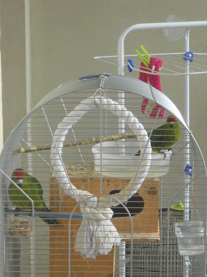 Besoin de conseil sur l'achat de deux nouveaux oiseaux Dscn1110