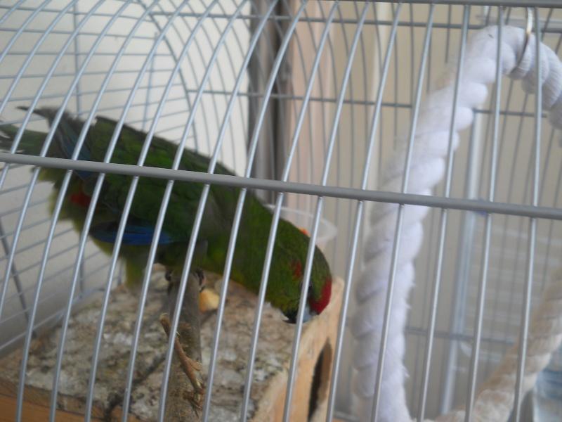 Besoin de conseil sur l'achat de deux nouveaux oiseaux Dscn1111