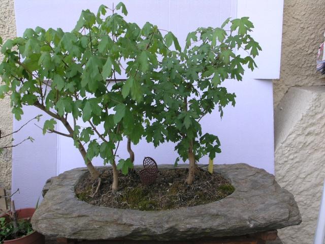 champêtres sur lauze P4137714