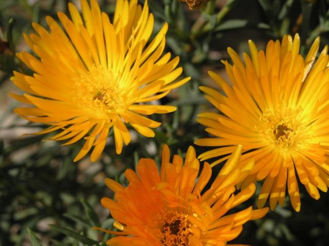 jolie fleur P4177714