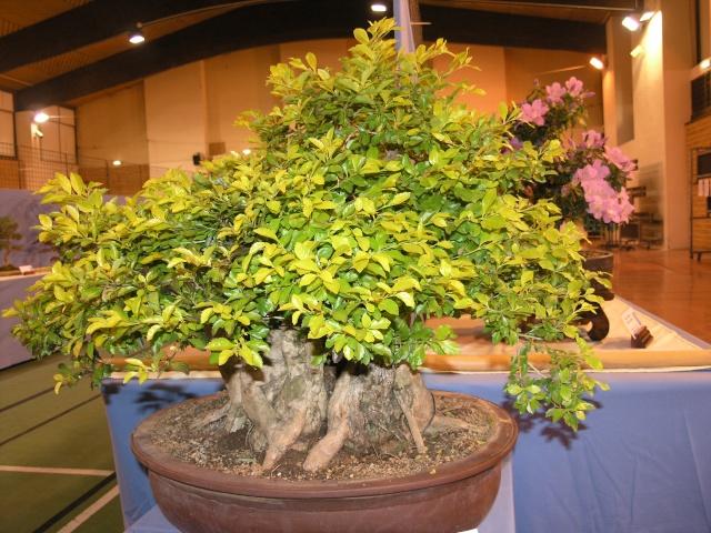 expo toulouges 7 et 8 mai 2011 P5077811