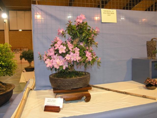 expo toulouges 7 et 8 mai 2011 P5077812