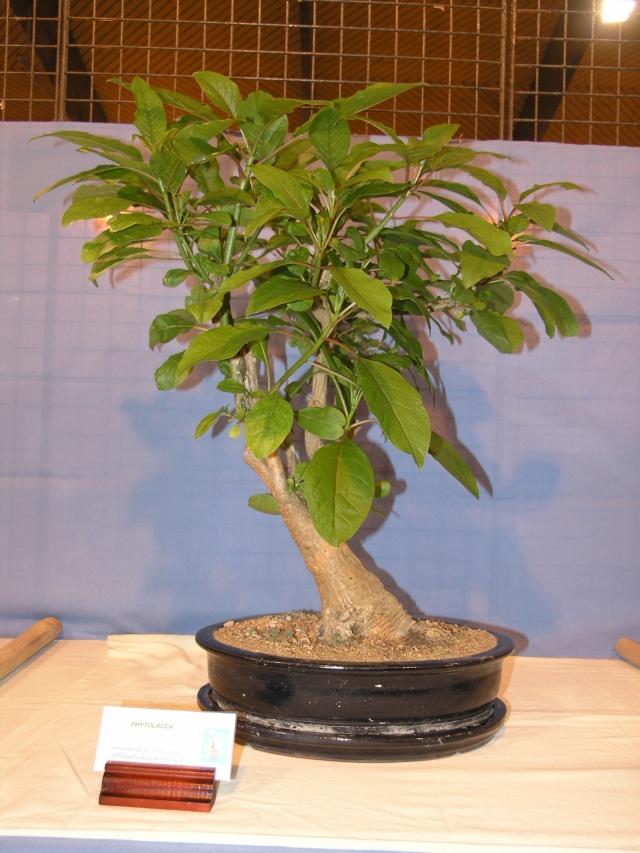 expo toulouges 7 et 8 mai 2011 P5077816