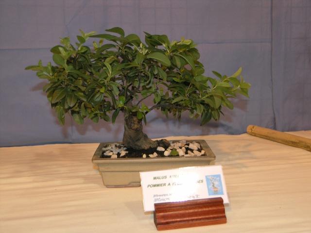 expo toulouges 7 et 8 mai 2011 P5077818