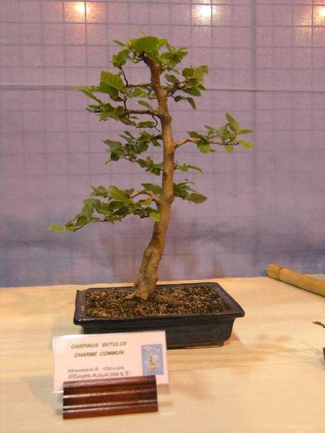 expo toulouges 7 et 8 mai 2011 P5077820