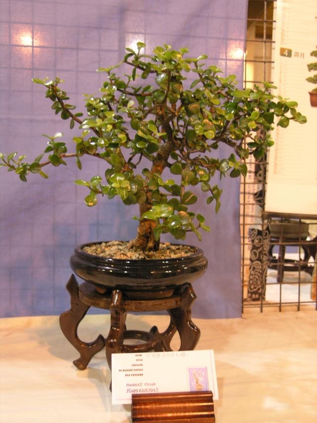 expo toulouges 7 et 8 mai 2011 P5077822