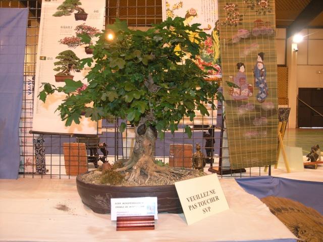 expo toulouges 7 et 8 mai 2011 P5077823