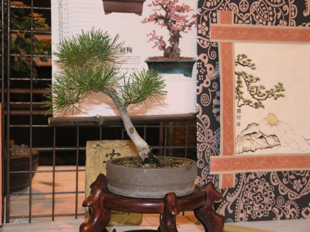 expo toulouges 7 et 8 mai 2011 P5077824