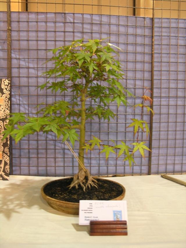expo toulouges 7 et 8 mai 2011 P5077825