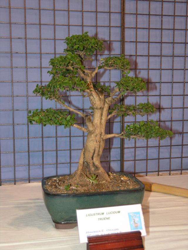 expo toulouges 7 et 8 mai 2011 P5077826