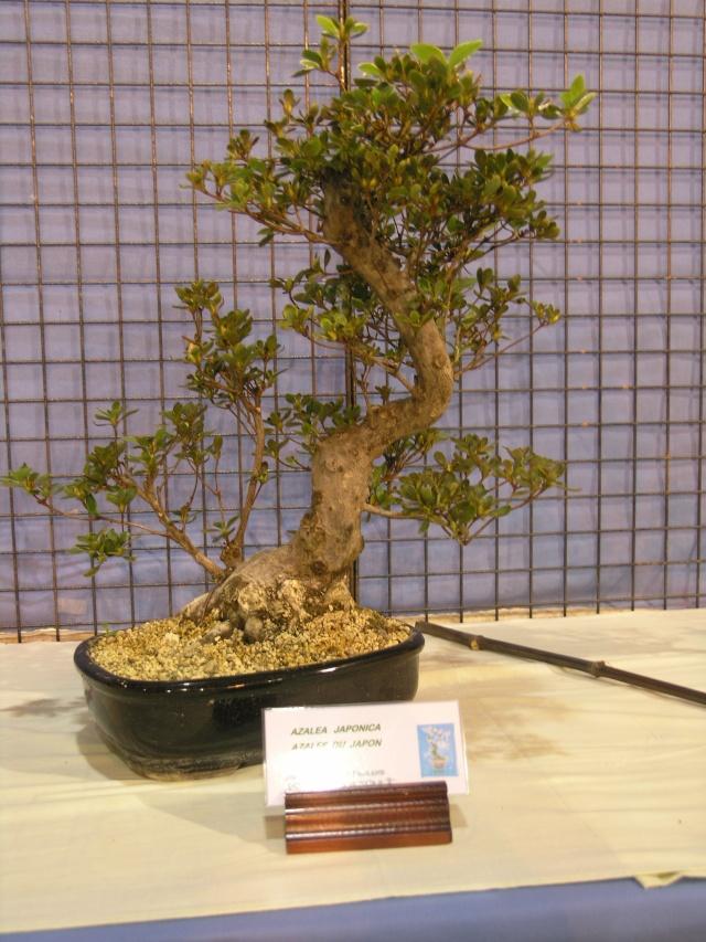 expo toulouges 7 et 8 mai 2011 P5077834