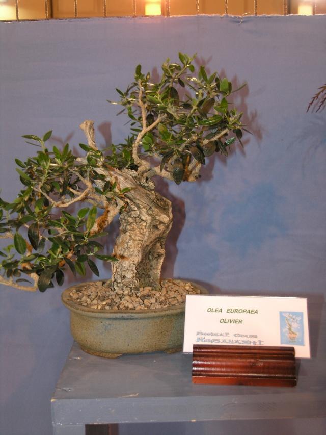 expo toulouges 7 et 8 mai 2011 P5077911