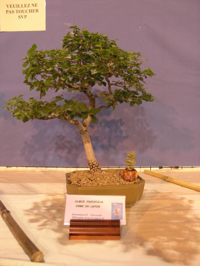 expo toulouges 7 et 8 mai 2011 P5077917