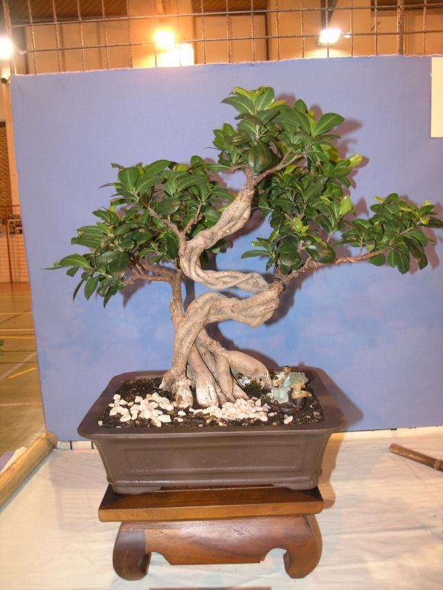 expo toulouges 7 et 8 mai 2011 P5077918