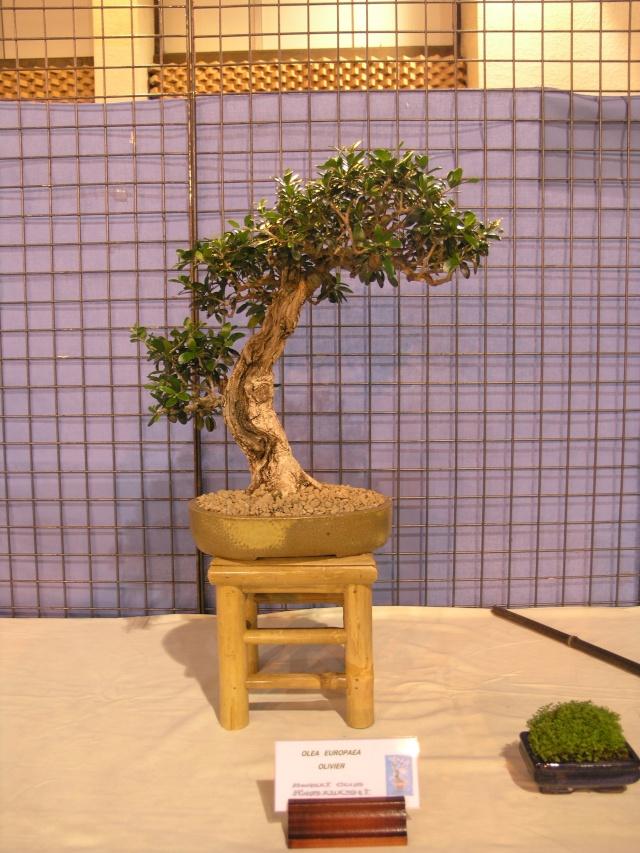 expo toulouges 7 et 8 mai 2011 P5077920