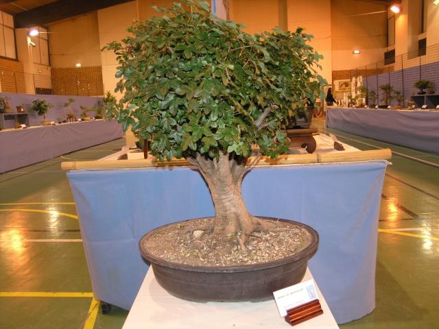 expo toulouges 7 et 8 mai 2011 P5077921