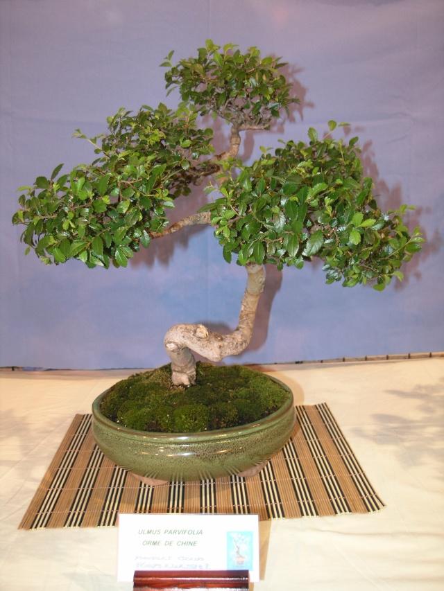expo toulouges 7 et 8 mai 2011 P5077927