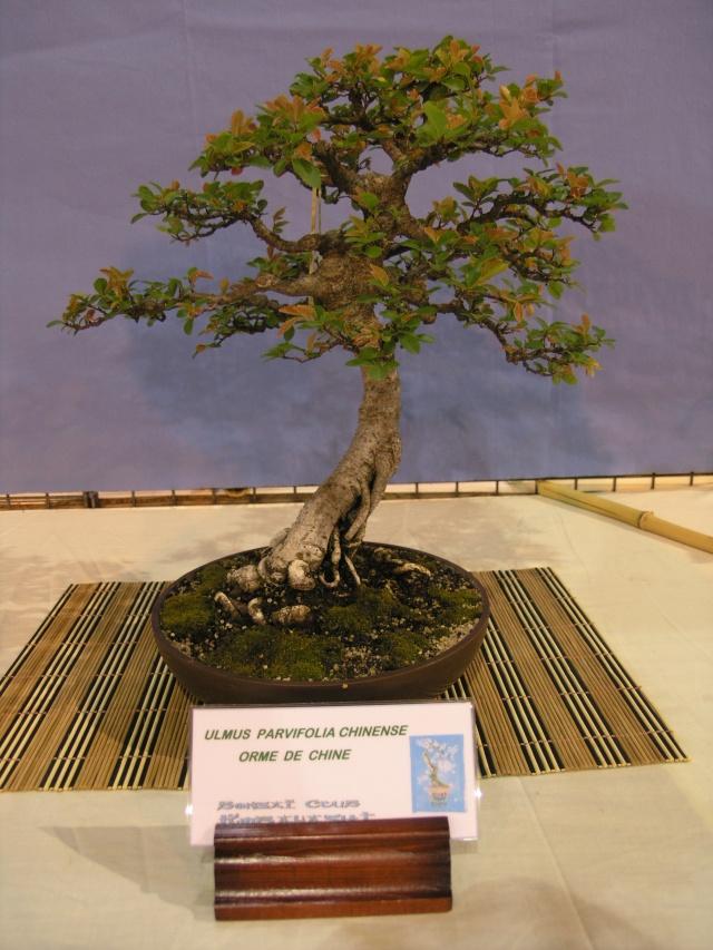 expo toulouges 7 et 8 mai 2011 P5077929