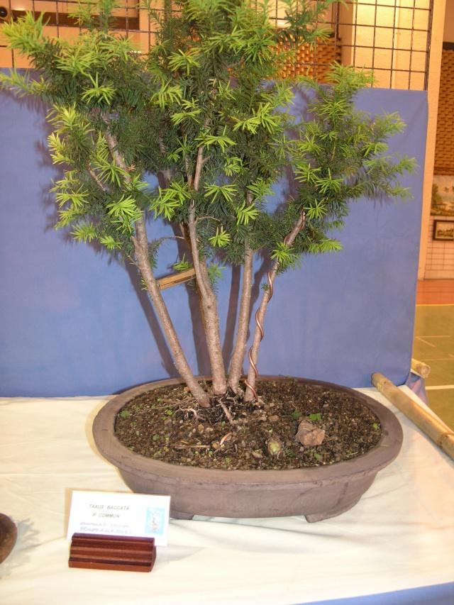 expo toulouges 7 et 8 mai 2011 P5077934