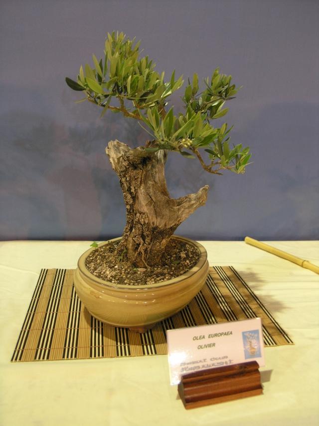 expo toulouges 7 et 8 mai 2011 P5077935