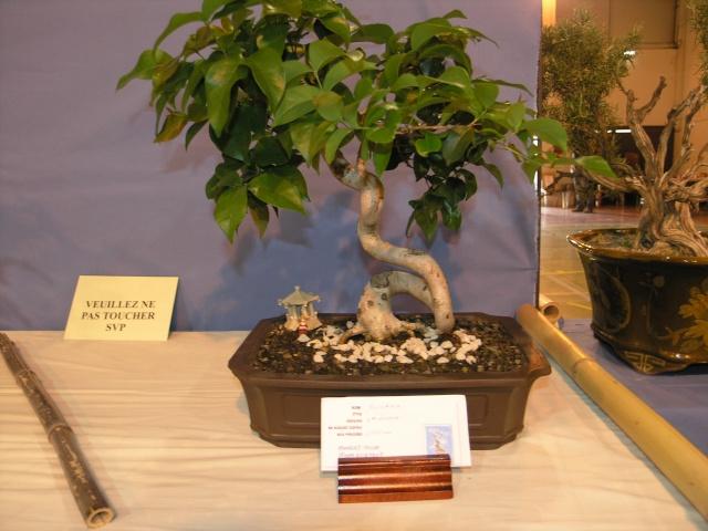 expo toulouges 7 et 8 mai 2011 P5077940