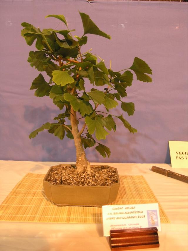 expo toulouges 7 et 8 mai 2011 P5077941