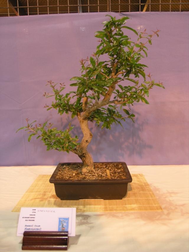 expo toulouges 7 et 8 mai 2011 P5077944