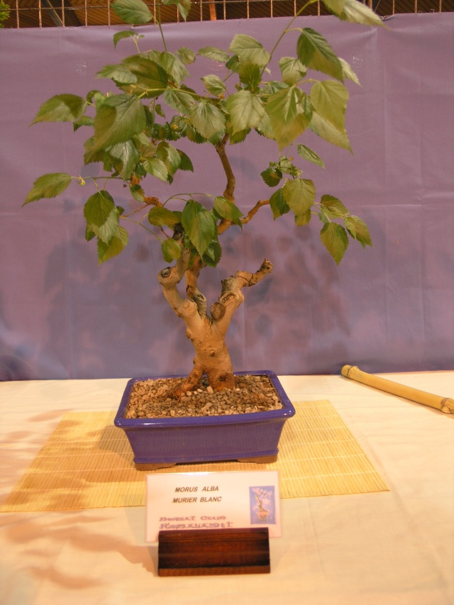 expo toulouges 7 et 8 mai 2011 P5077947