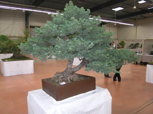 expo Castres 18/06/2011 P6188011