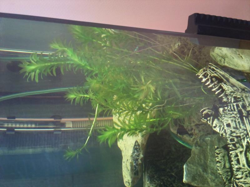 Plante Dsc_0111