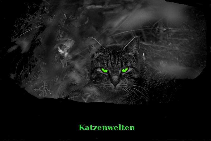 Katzenwelten