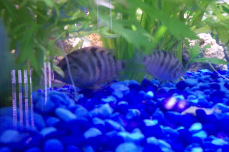 Débutante en aquariophilie 100_5212