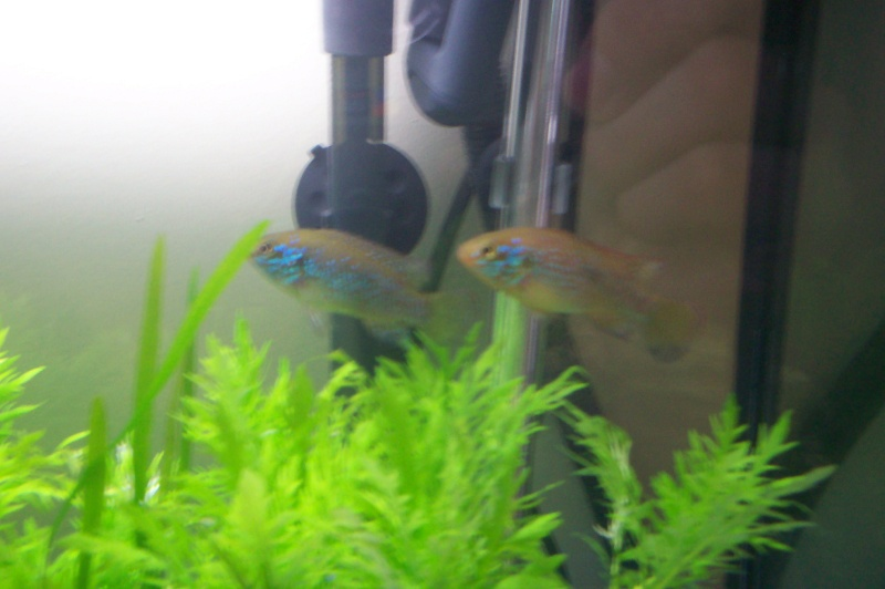 Débutante en aquariophilie 100_5214
