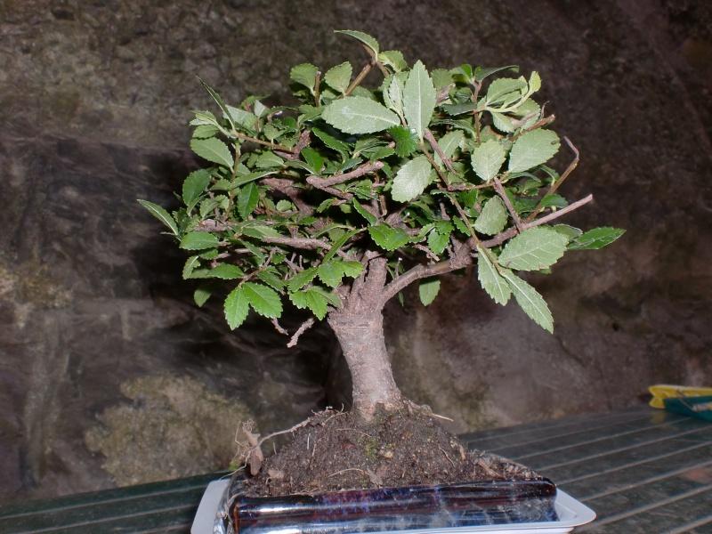 neofita e semi Cimg0410