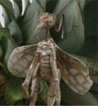 [Manual del Explorador Colonial] Fauna y flora: Las hadas comunes, defensa y caza Fathum10