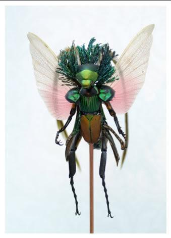 [Manual del Explorador Colonial] Fauna y flora: Las hadas comunes, defensa y caza Fathum12