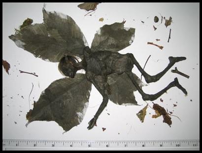 [Manual del Explorador Colonial] Fauna y flora: Las hadas comunes, defensa y caza Fathum13