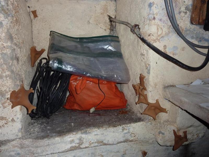identification de champignon de cave P1040611