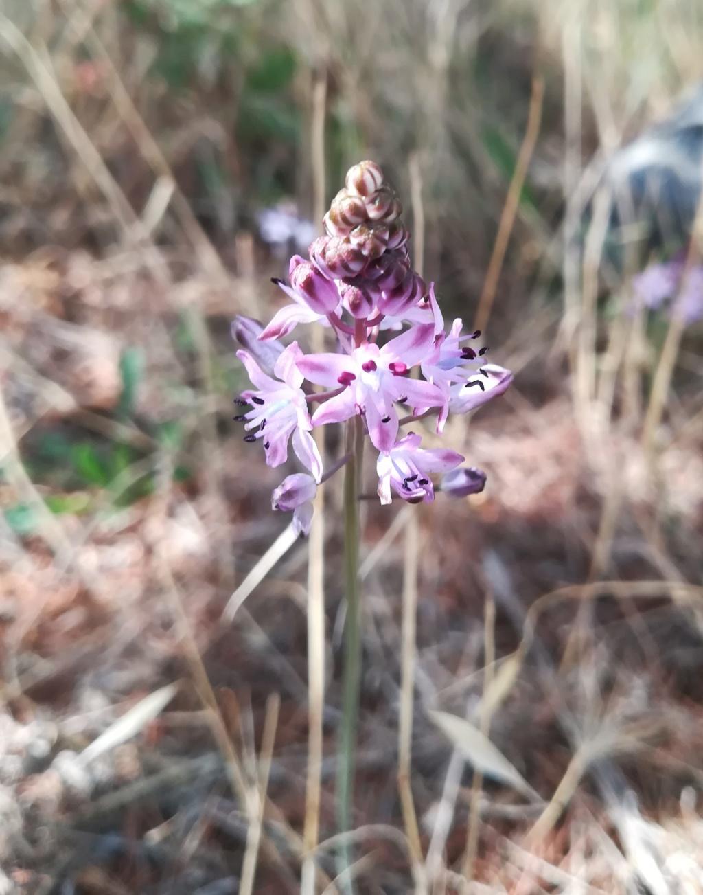 mini-orchis ? Img_2010