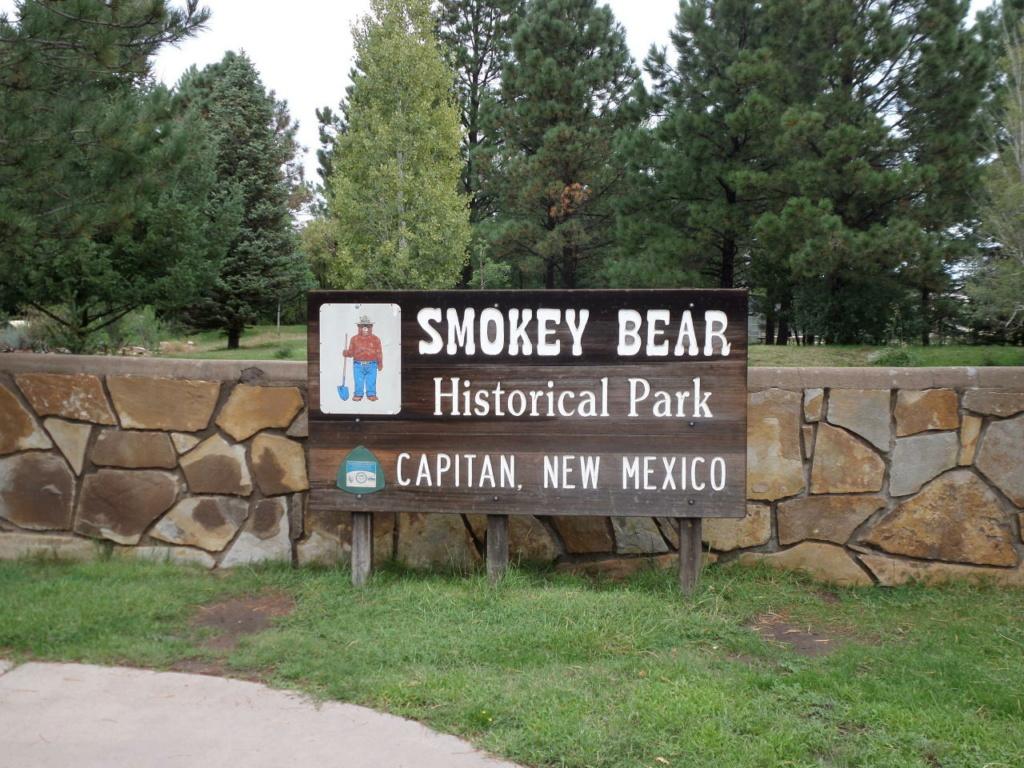 Saw a Bear. Smokey10