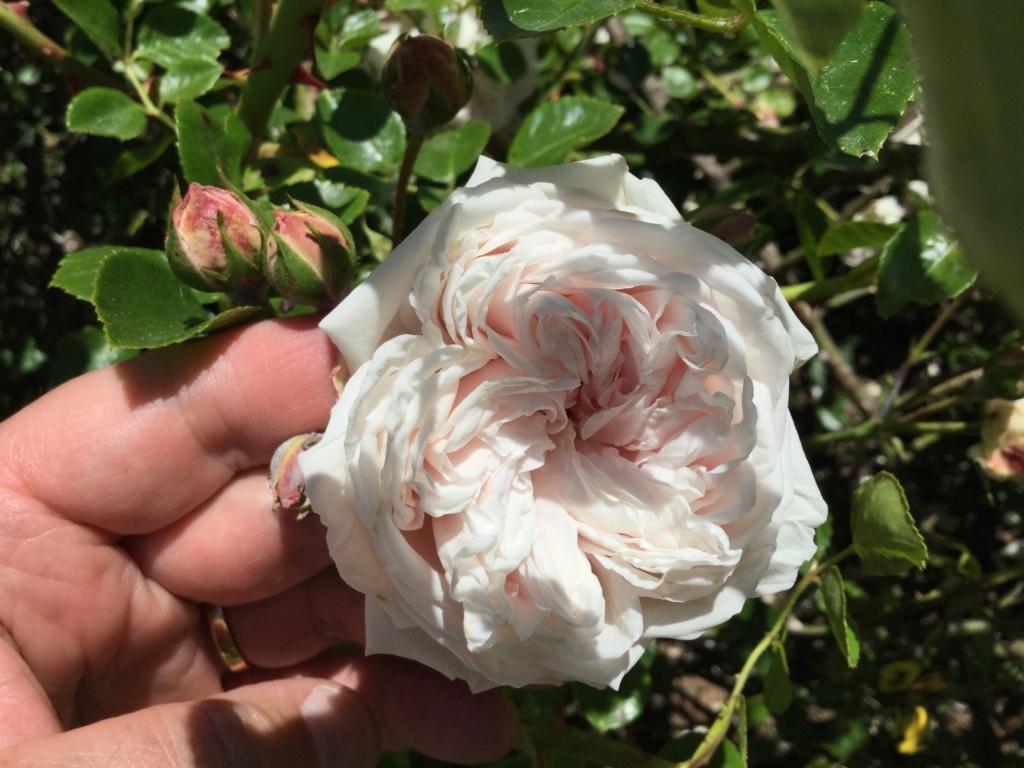 La Roseraie des Pommiers en Ardèche 2c67d010